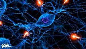 نورون-مغز